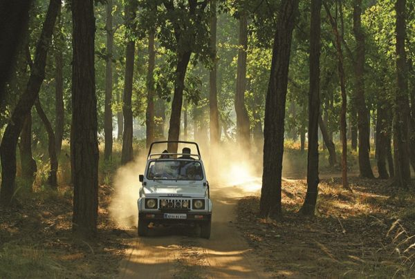 Bandhavgarh-6- Enchanting Madhya Pradesh | Madhya Pradesh| Travel Agency in India| Tour Operator in India | Best Travel Agents in Madhya Pradesh | enchantingmadhyapradesh.com