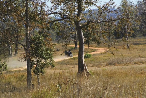 Kanha-15  Enchanting Madhya Pradesh | Madhya Pradesh| Travel Agency in India| Tour Operator in India | Best Travel Agents in Madhya Pradesh | enchantingmadhyapradesh.com