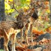 pench-national-park2| Enchanting Madhya Pradesh | Madhya Pradesh| Travel Agency in India| Tour Operator in India | Best Travel Agents in Madhya Pradesh | enchantingmadhyapradesh.com